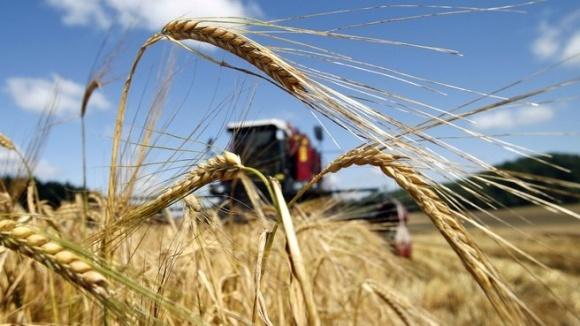 Урожаю зернових зберуть більше від очікуваного - аналітик фото, ілюстрація