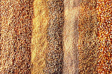 В Украине - дефицит качественного зерна для призводства круп фото, иллюстрация
