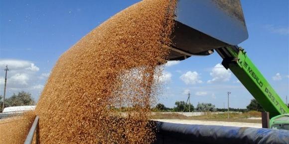 Мінагрополітики проведе переговори з В'єтнамом щодо відновлення експорту української пшениці фото, ілюстрація