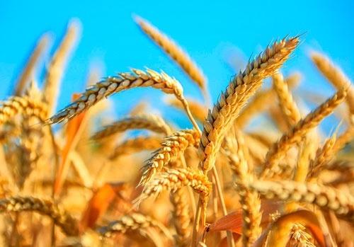 В Сумской области намолочено 2 млн тон зерна фото, иллюстрация