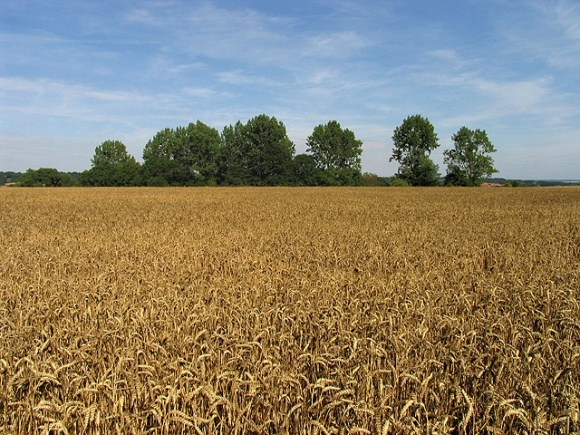 Урожай раннезернових собрано фото, иллюстрация