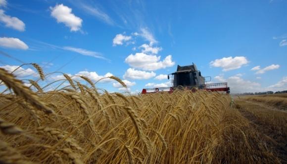 Урожай зернових та сої цього року буде рекордним по всій планеті фото, ілюстрація