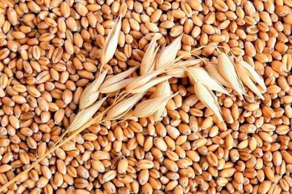 Світове виробництво пшениці в сезоні-2021/22 МР оновить рекорд, — FAO фото, ілюстрація