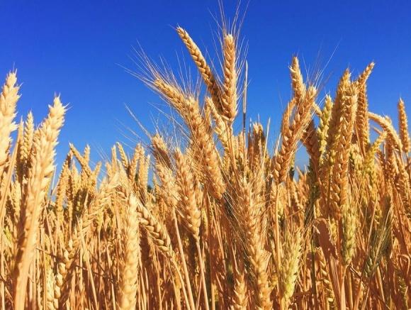 Экспорт зерна и масел увеличился, а мяса - упал фото, иллюстрация