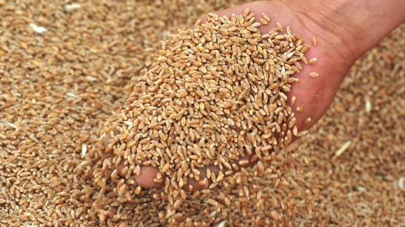 Аграрії Тернопільщини загрожують висипати зерно на дорогу через відсутність вагонів фото, ілюстрація