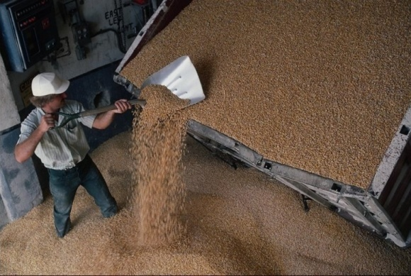 Мировой рынок зерна может выйти на рекорд по запасам в 2017/2018 фото, иллюстрация