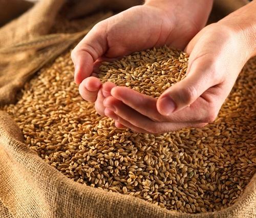 Минагрополитики назвало области-лидеры по сбору зерновых фото, иллюстрация