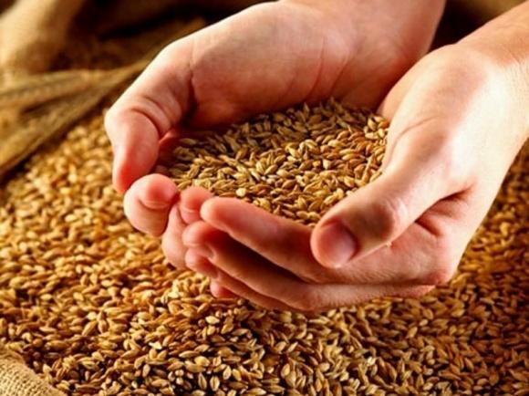 Чорноморський регіон зібрав на 18% більше зерна, ніж у 2015 році фото, иллюстрация