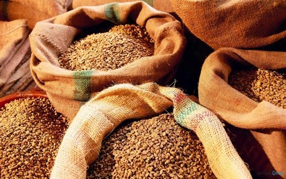 Запасы зерна в Украине на 5% ниже прошлогодних фото, иллюстрация