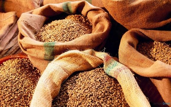 У поточному сезоні Україна забезпечила 20% імпорту пшениці Індією фото, ілюстрація