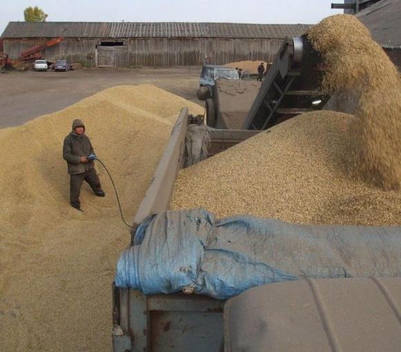Уряд повинен ввести тимчасові вивізні мита на експорт зерна - економіст фото, ілюстрація