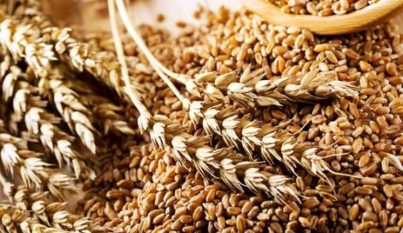 К концу года Украина в экспортном направлении поставила свыше 18,5 млн тонн пшеницы фото, иллюстрация