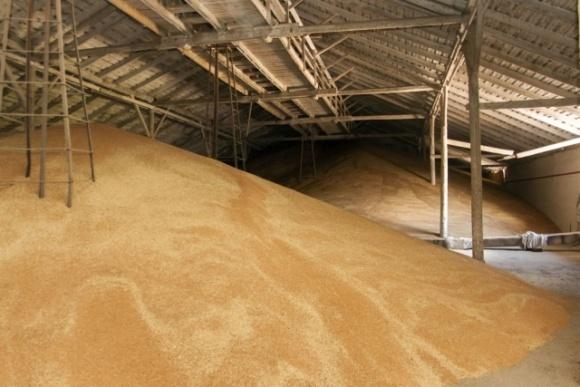 Насіннєві запаси зернових культур на складах уражені шкідниками фото, ілюстрація