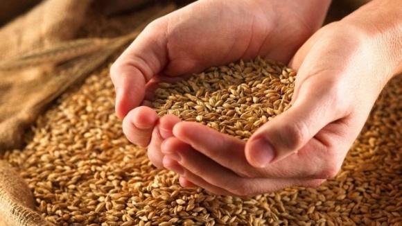 Среднее содержание белка в украинской пшенице урожая-2019 входит в пятерку наивысших показателей за последние 16 лет, — СЖС Украина фото, иллюстрация