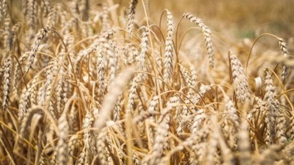 Названы ТОП-10 стран-импортеров украинского зерна фото, иллюстрация
