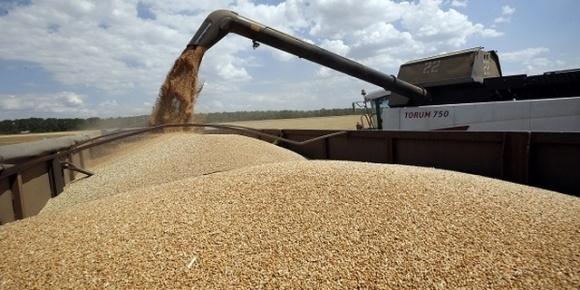 В этом году урожай пшеницы в Украине хуже прошлогоднего фото, иллюстрация