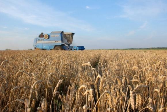 Врожай на Дніпропетровщині: як погода вплинула на посіви фото, ілюстрація