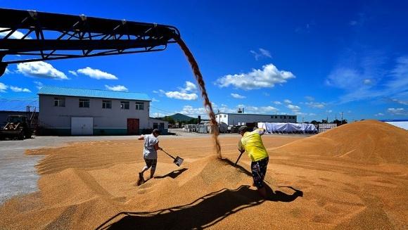 Мировые цены на пшеницу и кукурузу растут фото, иллюстрация