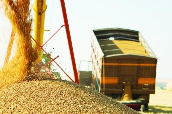 Врожай зерна на Житомирщині зріс на 26% фото, ілюстрація