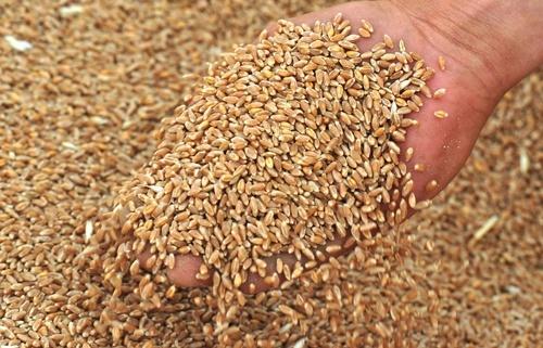 Экспорт Украинского зерна с начала 2018/19 МГ превысил 32 млн. тонн фото, иллюстрация