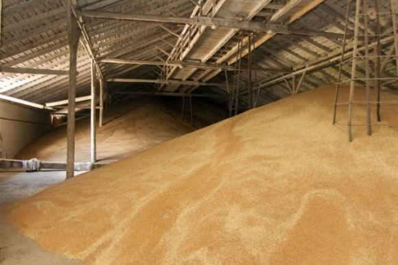 Запаси зернових та олійних в Україні значно нижчі, ніж рік тому фото, ілюстрація