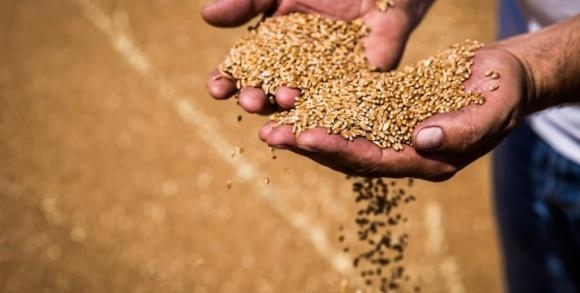 Урожай зерновых в Украине превысит ожидания фото, иллюстрация