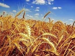 Иранцы будут выращивать сельхозпродукцию на Одещине фото, ілюстрація