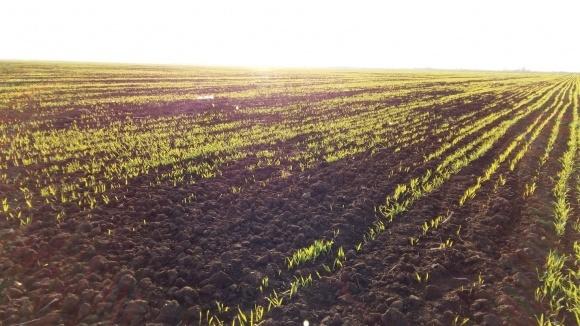 Перша декада травня була малосприятливою для проростання зерна пізніх культур фото, ілюстрація