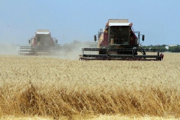 Урожай зернових уже на 5 мільйонів тонн перевищує минулорічний фото, ілюстрація