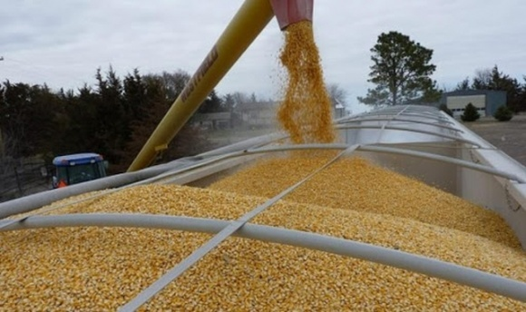 Три четверти экспорта: Украина продала уже 39 миллионов тонн зерновых фото, иллюстрация