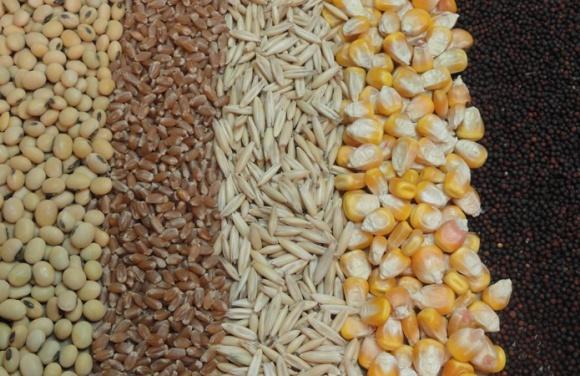 Производство зерновых и зернобобовых в 2017 году сократится фото, иллюстрация
