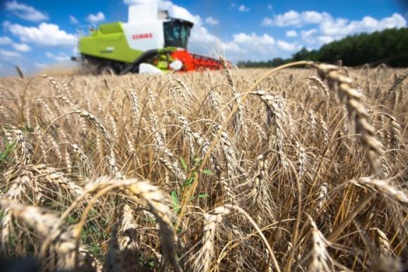 В Евросоюзе урожай зерновых ниже прошлогоднего фото, иллюстрация