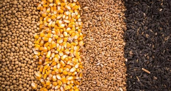 Китайский коронавирус продолжит обваливать цены на зерновые и масличные фото, иллюстрация