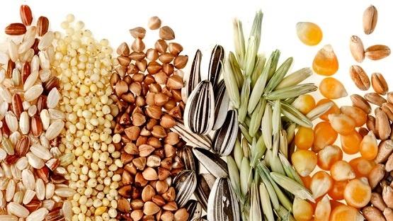 Приріст експорта по зерновій групі за останній рік становить 11,3% фото, ілюстрація