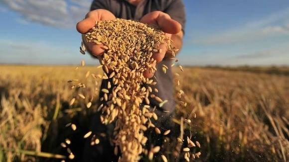 Ринок контрафактного зерна не піддається обчисленню, — експерти  фото, ілюстрація