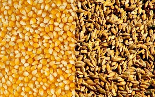 Україна експортувала 40 млн тон зернових культур, у тому числі 22 млн тон кукурудзи фото, ілюстрація