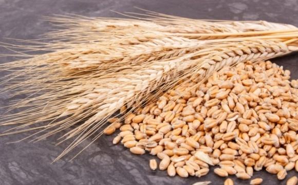 Черкасская область среди лидеров по урожайности зерновых и зернобобовых культур фото, иллюстрация