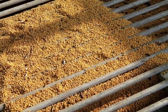 Ринок насіння в Україні перенасичений, але не знято питання якості фото, ілюстрація