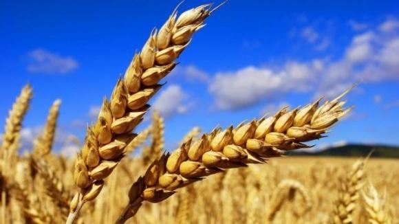 В ВР Украины зарегистрирован законопроект о регулировании цен на зерно фото, иллюстрация