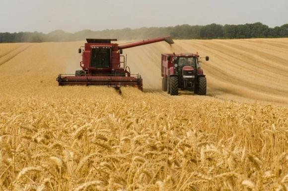 ЄС у 2021 році прогнозовано збере більше зерна та ріпаку фото, ілюстрація