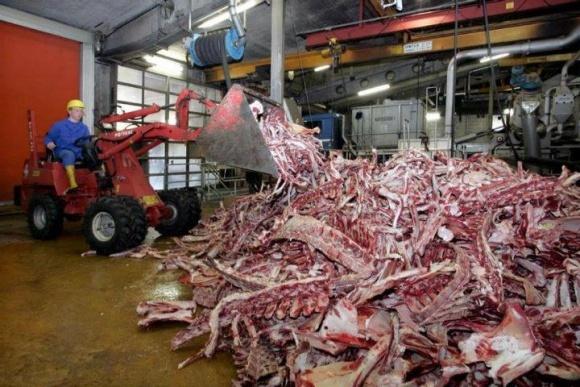 Из-за АЧС Лисичанскому желатиновому заводу не хватает сырья фото, иллюстрация