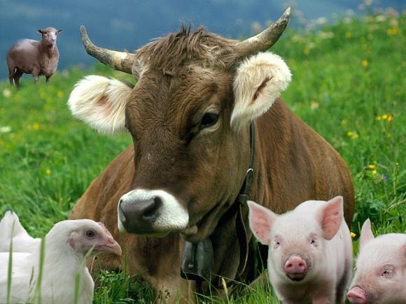 13 неожиданных фактов о животноводстве Украины фото, иллюстрация