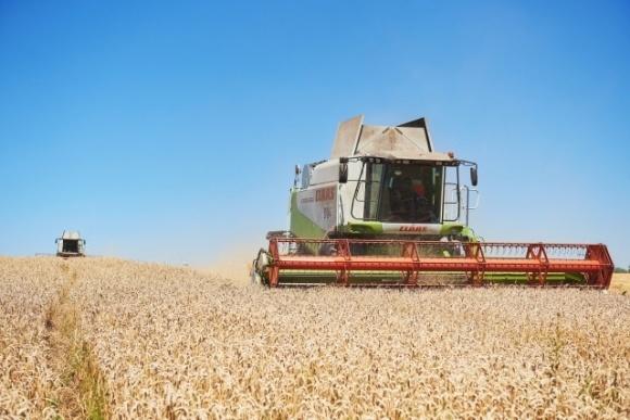 Ивано-Франковская область: Собирают много, но зерно ненаполненное фото, иллюстрация