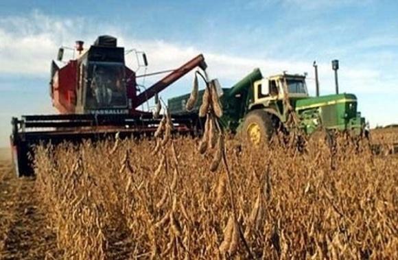 Урожайность сои на Львовщине в этом году на 30% выше средней по Украине фото, иллюстрация