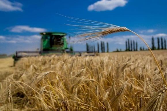 В Україні підвели підсумки жнив основних сільгоспкультур фото, ілюстрація