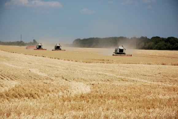 Черниговщина пересекла рубеж в 1 млн т ранних зерновых фото, иллюстрация