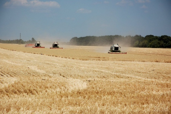 На Черкащині врожай ранніх зернових перевищив 1 млн т фото, ілюстрація