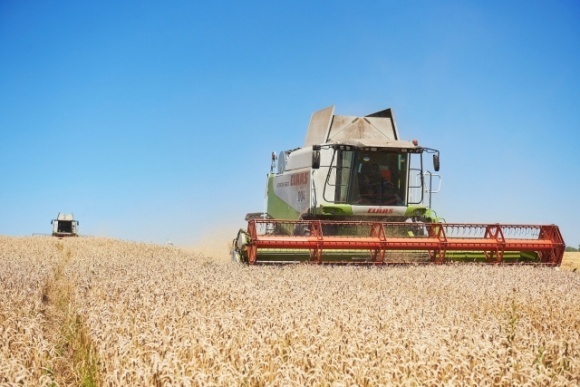 Темпи збирання зернових в Україні відстають від торішніх — експерти  фото, ілюстрація