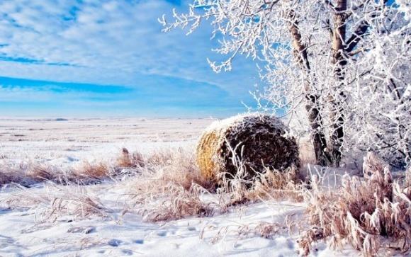 Зима в Украине: синоптик рассказал, насколько будет холодно и ждать ли снега фото, иллюстрация
