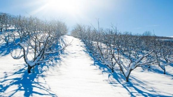 Как морозы повлияют на будущий урожай: оценка эксперта фото, иллюстрация